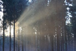 forest-and-sunlight