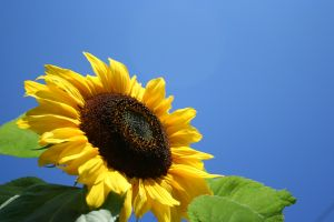 Sunflower PNMs Prosperity project a first for solar energy storage